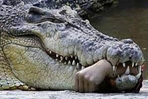 تجاوز جنسی 3 برادر به تمساح غول پیکر که باعث شد تکه تکه شوند!