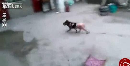 کار عجیب و وحشتناک پختن سگ زنده و کندن پوست سگ توسط مرد چینی! + تصاویر