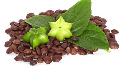 دانههای «سه چا اینچی»