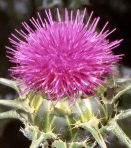 برای پیشگیری از سرطان پوست این گیاهان مفید را مصرف کنید