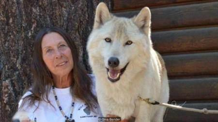 این زن عاشقانه در کنار گرگ هایش زندگی می کند! + تصاویر زن و گرگ ها