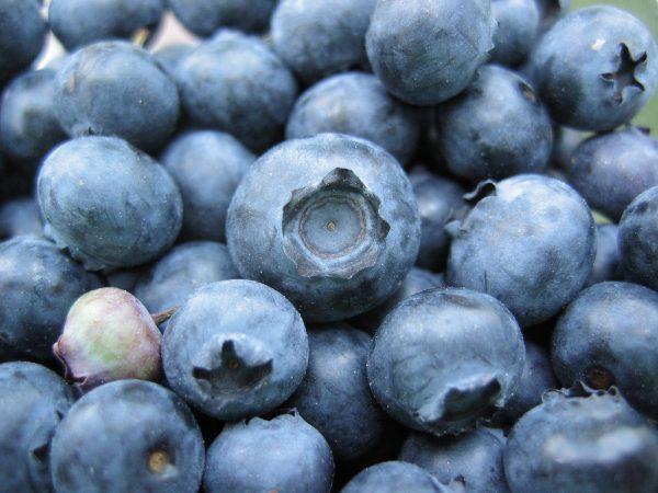 برای تقویت مغز و حافظه این 8 ماده غذایی را استفاده کنید