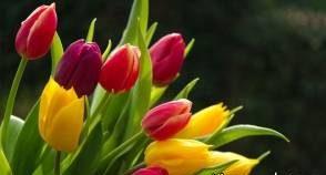 روش هایی برای نگهداری بیشتر از انواع گل
