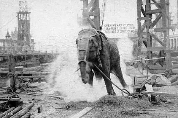 فیلی در بند الکتریسیته