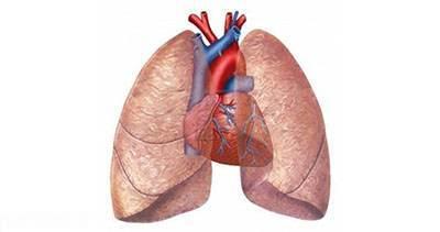 سیر مصرف کنید تا ریه های شما پاکسازی شود
