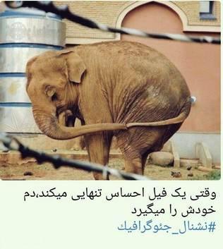 Photo of عکس های خنده دار از سوژه های خنده دار ایرانی و خارجی این ماه 22