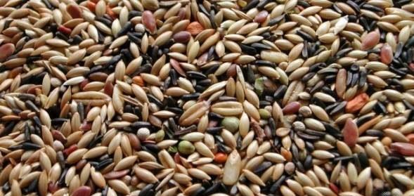 خوراکی های سرشار از کلیسم غیر لبنی