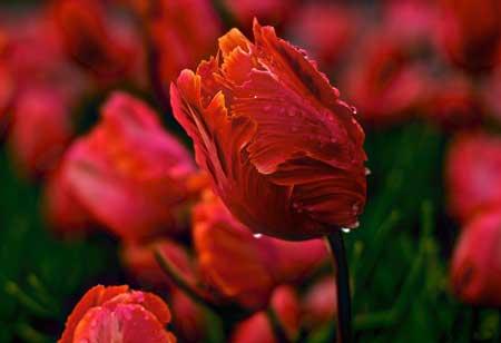عکس های زیبا و انرژی دهنده گل های رنگارنگ برای پروفایل