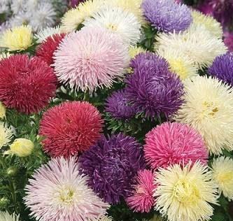 Photo of نحوه نگهداری گل مینا و پرورش گل مینا + تصاویری از این گل بسیار زیبا