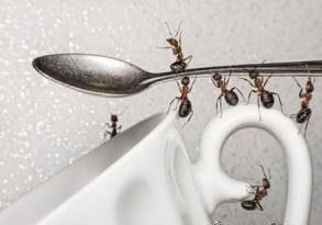 روش هایی برای دور کردن مورچه از خانه