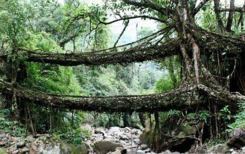 پل های گیاهی هند
