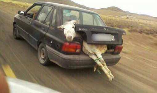 عکس های جالب و خفن جدید و خنده دار از کشورمان