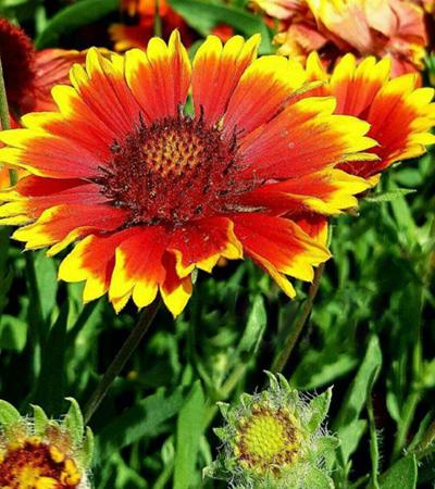 Photo of روش کاشت گل رعنا + نگهداری و پرورش گل رعنا در منزل
