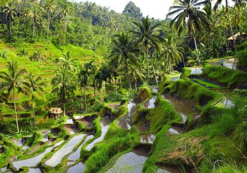 بالی و دنیایی از هیجان در انتظار شما...