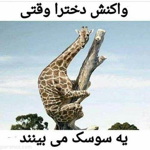 عکس های فان و بسیار خنده دار از سوژه های خارجی و ایرانی