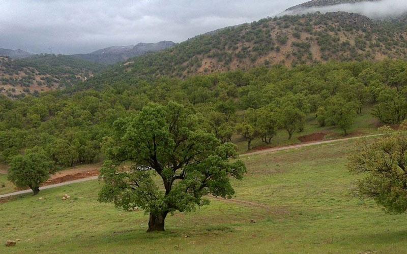 پارک جنگلی یاسوج