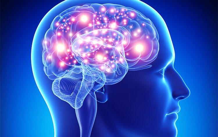 ظرفیت استفاده از مغز در انسان