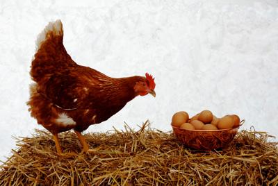 تست هوش تعداد تخم مرغ ها و مرغ