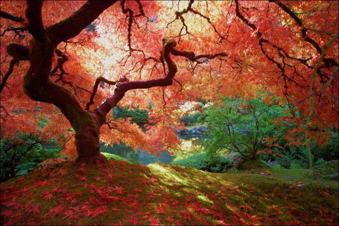 عکس نوشته های پاییزی و تصاویر رمانتیک عاشقانه پاییز | عکس پروفایل پاییزی