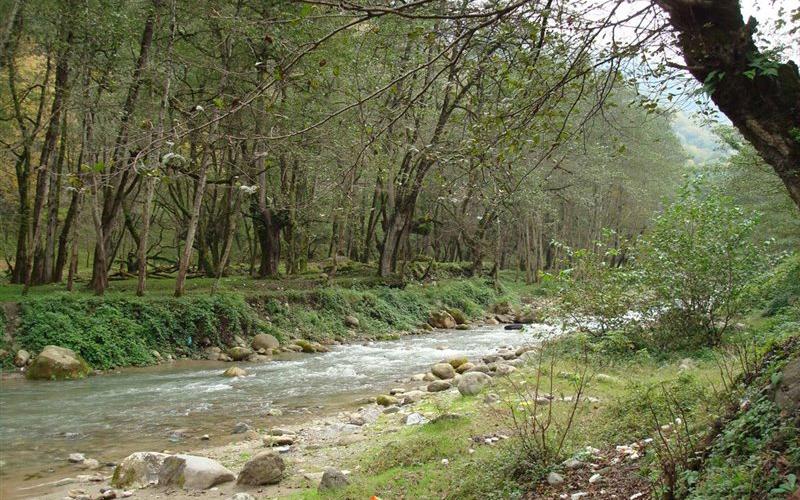 پارک جنگلی فین چالوس مکانی عالی برای تفریح در تعطیلات