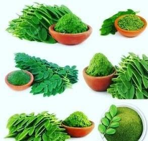 خواص گیاه مورینگا