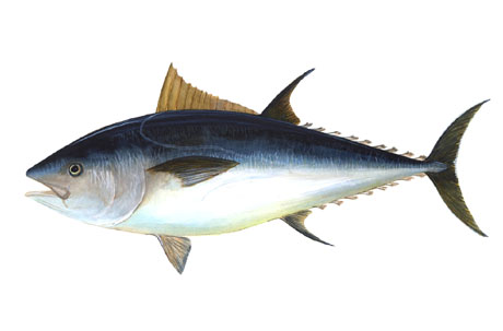 خطر خوردن ماهی در شب