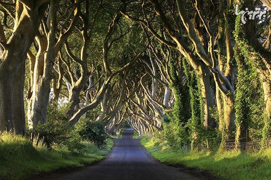 دارک هجز (The Dark Hedges)، ایرلند شمالی