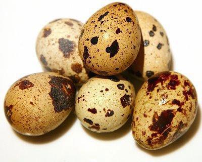 خاصیت تخم بلدرچین و تخم مرغ برای کودک