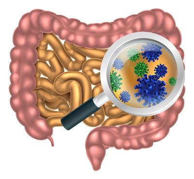 توصیه هایی برای تعادل میکروبیوم های روده و افزایش آن