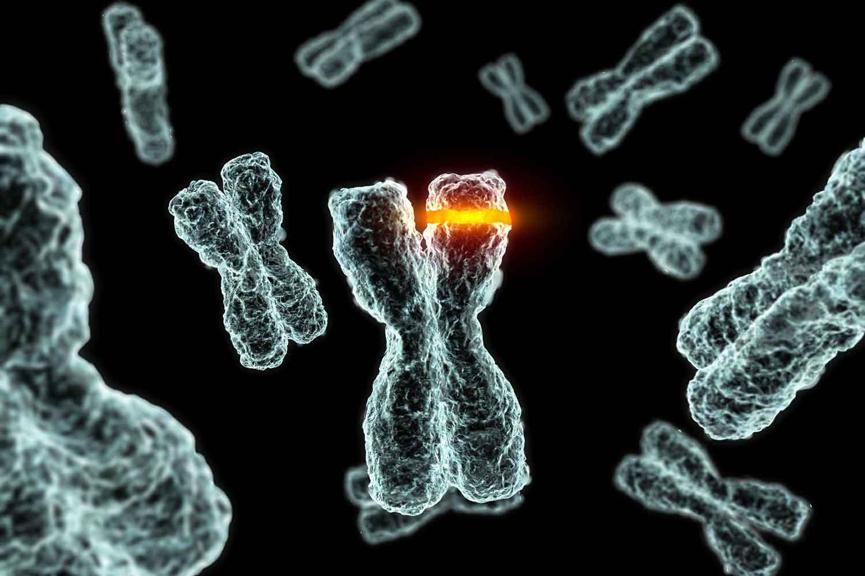 نسل مردان به دلیل از بین رفتن کروموزوم Y منقرض می شود!
