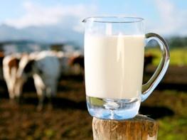 11 دلیل که نشان می دهد نیاز نیست هر روز شیر بنوشید!