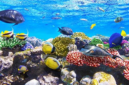 تصاویر دریای سرخ یکی از عجایب زیبای زیر آب در دنیا