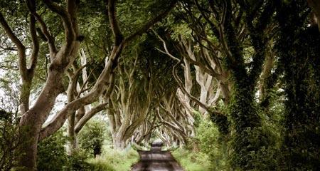 جاده تونلی