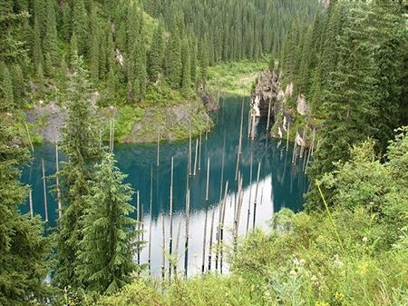 دریاچه ای عجیب با درختان وارونه