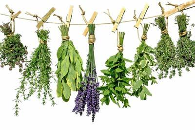 کوچک کردن سینه ها با این گیاهان دارویی