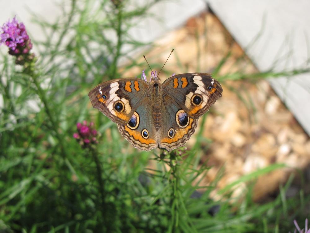 عکس پروفایل پروانه