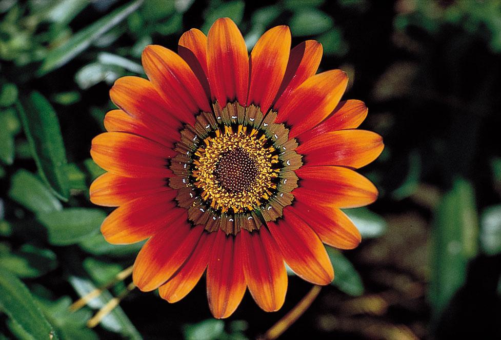 عکس پروفایل زیباترین گل های جهان