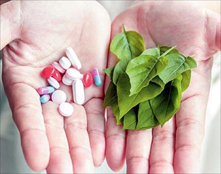 معرفی مسکن های گیاهی طبیعی به جای ضد دردهای شیمیایی