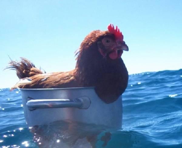 عکس های خنده دار حیوانات با سوژه های جالب و بامزه