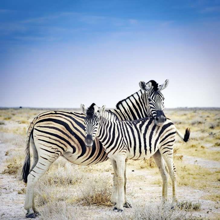 تولید مثل و زایمان حیوانات و عادات جالب آنها