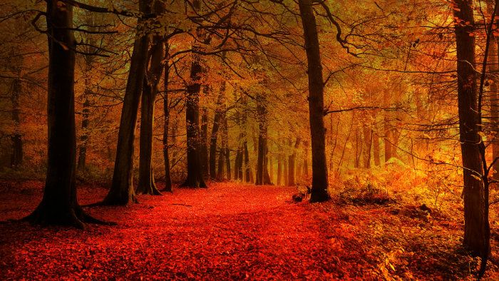 عکس های رویایی و عاشقانه از فصل پاییز با مناظر دیدنی فصل پاییز