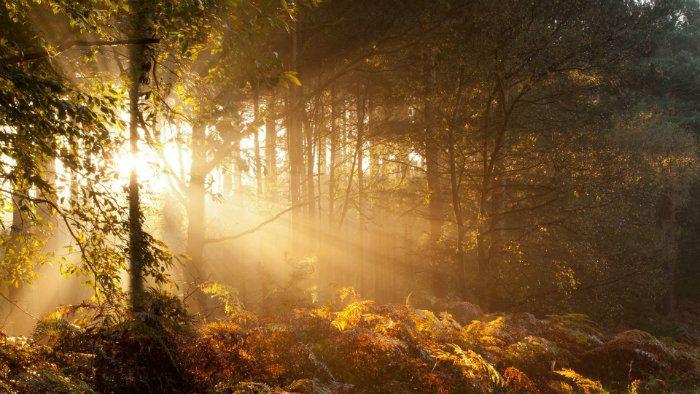 عکس رویایی پاییز