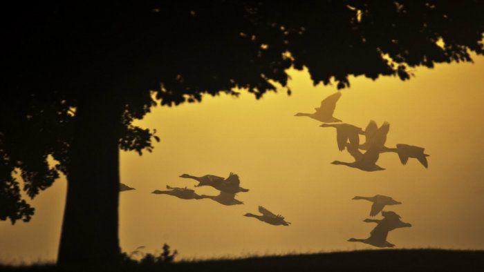 عکس رویایی پاییز {hendevaneh.com}{سایتهندوانه} - automn 11 - عکس های رویایی و عاشقانه از فصل پاییز با مناظر دیدنی فصل پاییز