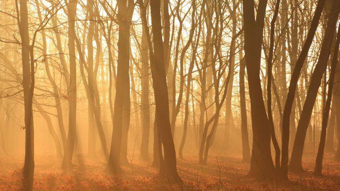 عکس رویایی پاییز {hendevaneh.com}{سایتهندوانه} - automn 12 - عکس های رویایی و عاشقانه از فصل پاییز با مناظر دیدنی فصل پاییز