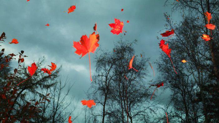 عکس رویایی پاییز {hendevaneh.com}{سایتهندوانه} - automn 16 - عکس های رویایی و عاشقانه از فصل پاییز با مناظر دیدنی فصل پاییز