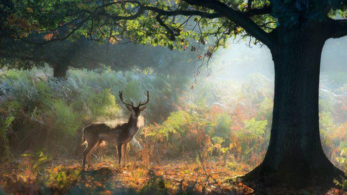 عکس رویایی پاییز {hendevaneh.com}{سایتهندوانه} - automn 3 - عکس های رویایی و عاشقانه از فصل پاییز با مناظر دیدنی فصل پاییز
