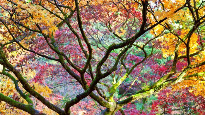 عکس رویایی پاییز {hendevaneh.com}{سایتهندوانه} - automn 4 - عکس های رویایی و عاشقانه از فصل پاییز با مناظر دیدنی فصل پاییز