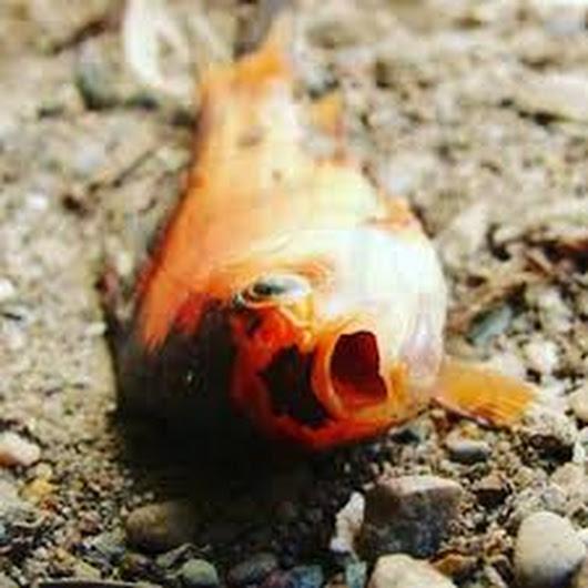 تعبیر خواب ماهی مرده