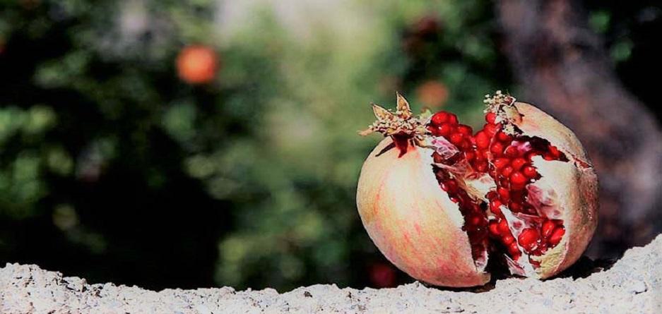 Photo of انار؛ میوه بهشتی در فرهنگ، هنر و آیین ایرانی