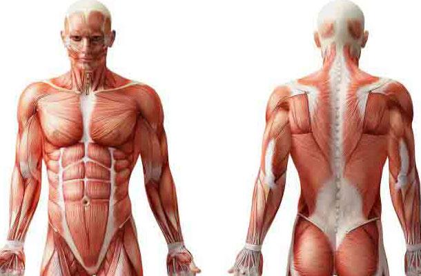 لرزش بدن و اندام های بدن هنگام استرس به چه دلیلی است؟